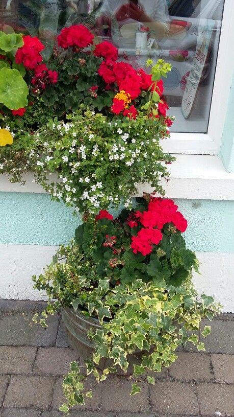Sumner flowers