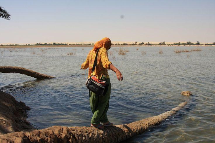 Siwa é, dos grandes oásis, o mais ocidental do Egipto, já perto da fronteira com a Líbia. Mais de 300 nascentes de água doce alimentam o oásis, irrigando cerca de 300 000 tamareiras e 70 000 oliveiras. O cenário torna-se ainda mais espectacular pois, nos arredores da cidade, encontram-se dois lagos salgados, com margens brancas …