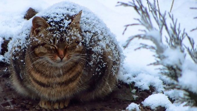 Pregnant cat freezing out in the snow will break you heart!