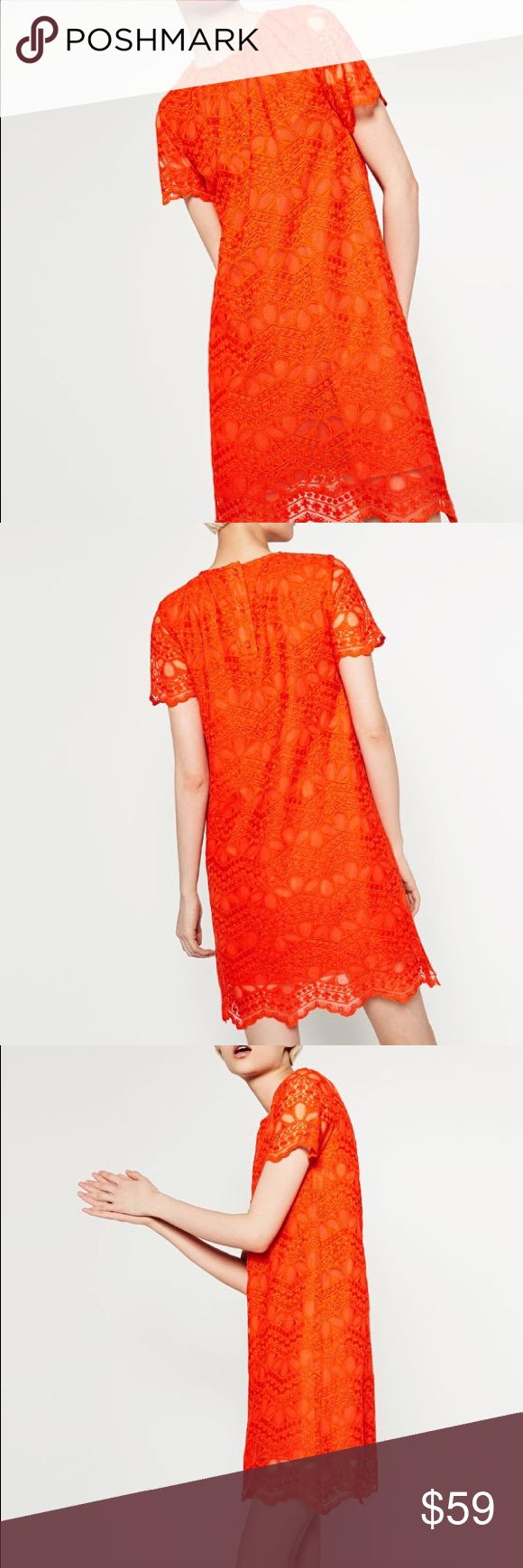 Orange lace dress Scalloped edge... short sleeve.. pretty lace pattern in a vibrant color.. fits about size 6 Zara Dresses Mini