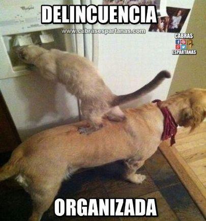 Delincuencia organizada Es una mafia