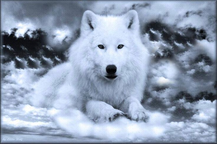 Respect Your Elders >> Wolf Credo Respect the elders....Teach the young...Cooperate with the pack Play when you can ...