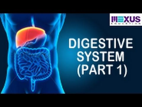 Learn About Digestive System | Human Digestive System Animation- Part 1 - YouTube