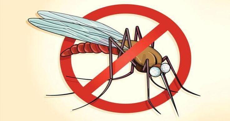 Home Remedies To Treat #Malaria #homeremedies #mosquito #health