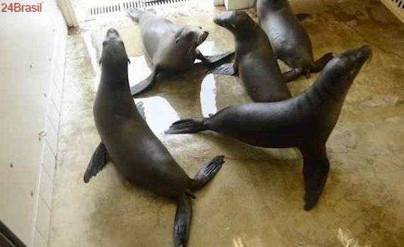 Leões-marinhos morrem após ingerir algas tóxicas geradas pela poluição dos oceanos