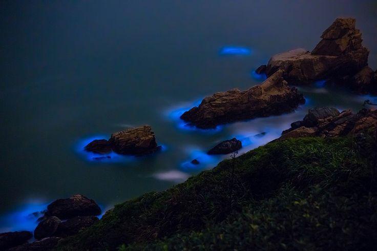 Meeresleuchten Bläulich oder grün leuchtendes Wasser wird von speziellen, bioluminiszenten Mikroorganismen (Noctiluca scintillans) ausgelöst, die in Massen auftreten und durch mechanische Reize zum Leuchten angeregt werden. Das ist in der Regel die Brandung, aber auch Bugwellen von Schiffen können Meeresleuchten auslösen - sogar Fische oder Schwimmer. Meeresleuchten tritt an warmen Küsten auf, an Nord- und Ostsee an lauen Sommerabenden. Tagsüber sieht man die Mikroorganismen als rosafarbene…