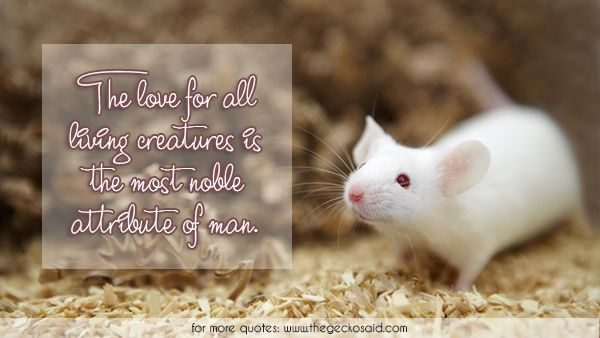The love for all living creatures is the most noble attribute of man.  #animal #attribute #creatures #living #love #man #mouse #noble #quote  ©2016 The Gecko Said – Beautiful Quotes