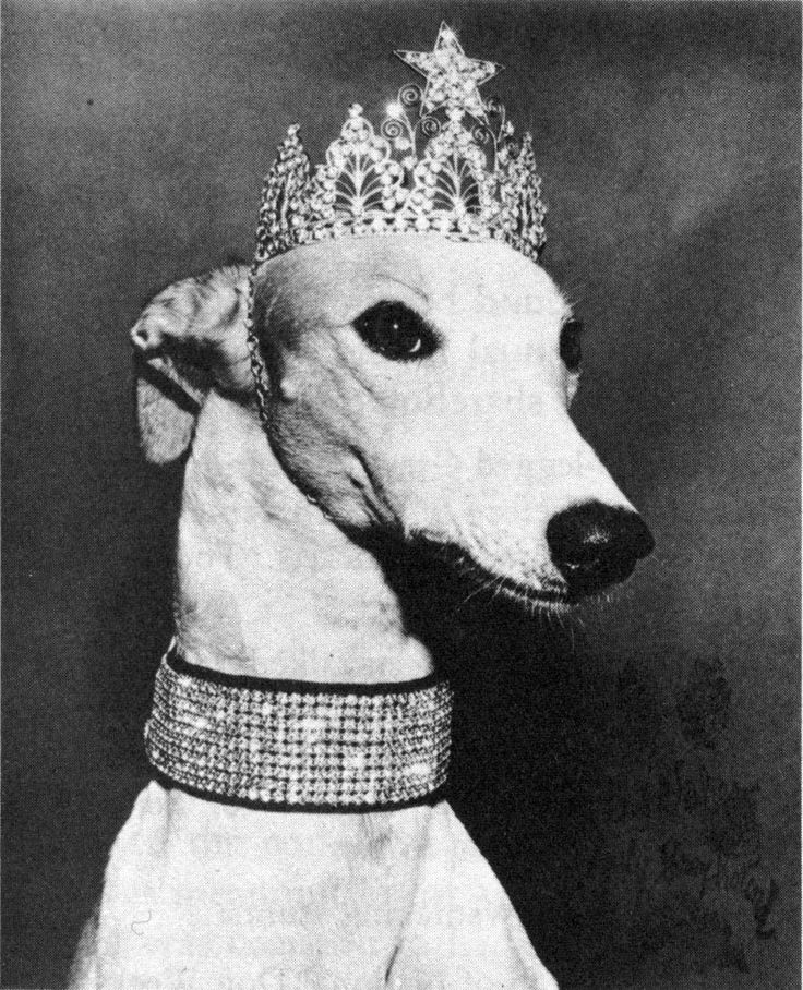 It was not until the 1930s that the now traditional image of the racing greyhound first appeared on the exterior of buses. In 1957 the company introduced a mascot, Lady Greyhound, who attired in a wide rhinestone collar and tiara, made public appearances at various charity events, was named America's canine symbol by the American Humane Association.