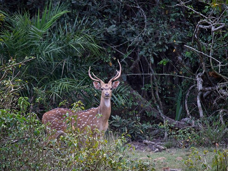 Wildlife Sanctuaries in Odisha, India, forests in Odisha