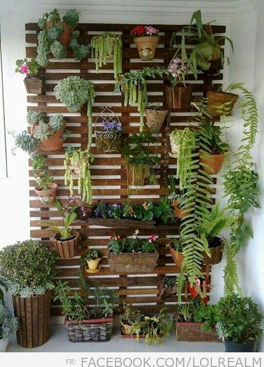 Hanging garden - on wall near courtyard