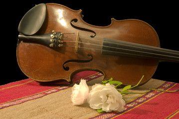 Vecchio violino con rosa