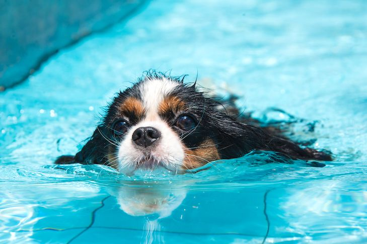 Hydrotherapy For Dogs A Growing Trend In Canine Physical Therapy In 2020 Dog Swimming Dogs Dog Ages