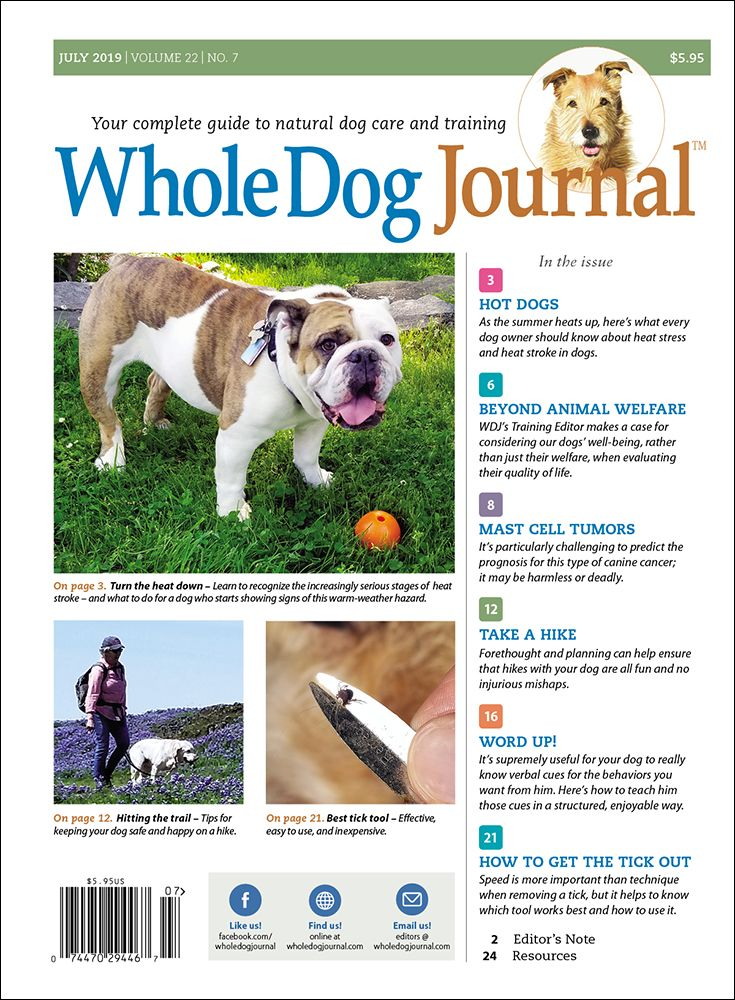 Download The Full July 2019 Issue Pdf Heat Stroke In Dogs Dogs