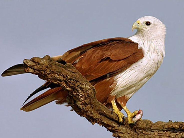Bibhutibhushan Wildlife Sanctuary - in West Bengal, India