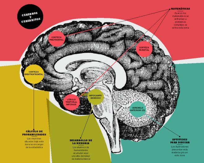Mejores 45 imágenes de Optometría en Pinterest | Neurociencia ...