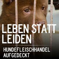 Der grausame Hundefleischhandel aufgedeckt   Eine Undercover Recherche von Animal Equality PETITION!!!!!!!!!!!!!!!!!!