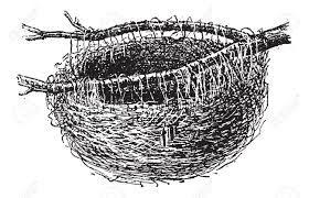 Resultado de imagen para nido de oropendolas