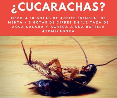 Tips Esenciales: Aceites esenciales repelentes de Cucharachas