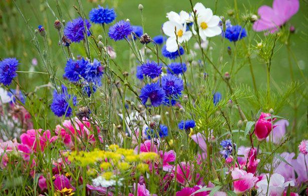 Полевые цветы - естественная красота и гармония (фото). Обсуждение на LiveInternet - Российский Сервис Онлайн-Дневников