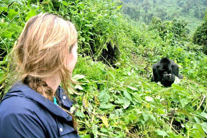 Spending time with a family of Mountain Gorillas is an unforgettable experience and a privilege. Access to the gorillas is restricted. Get in touch for information about permits and where to stay to make the most of your trek.