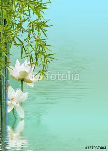 composition zen détente, lotus ,bambous, reflets