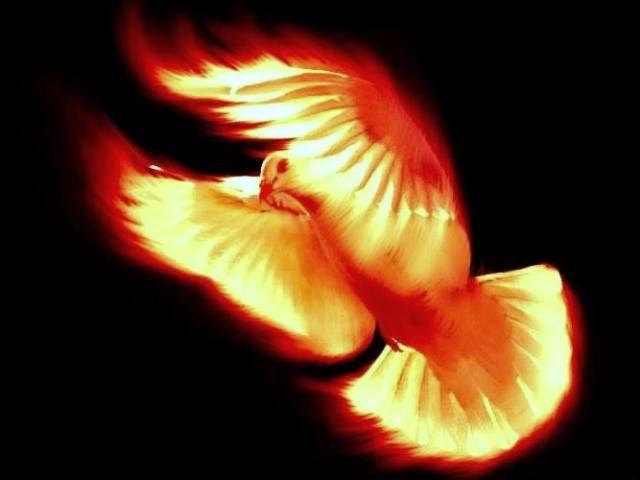 JOUW MISSIE OP AARDE - Goddelijk Licht en Liefde gaan belichamen