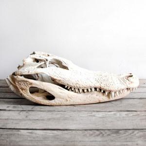 gator skull : parfait pour une déco d'ambiance dans la salle de bains