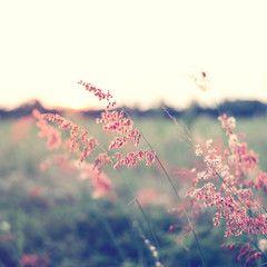Vintage wild flower in sunset, instagram filter