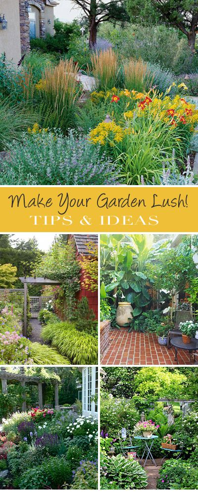 Make Your Garden Lush! • Great Tips and Ideas!