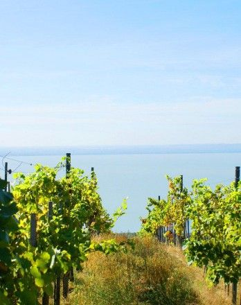 Badacsony Wine Weeks #balaton #europe http://welovebalaton.hu/en/events/badacsony-wine-weeks