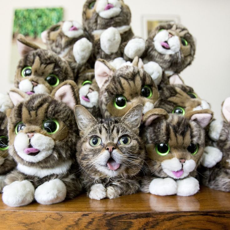 Lil BUB Plush ToyTap the link to check out great cat products we have for your little feline friend!