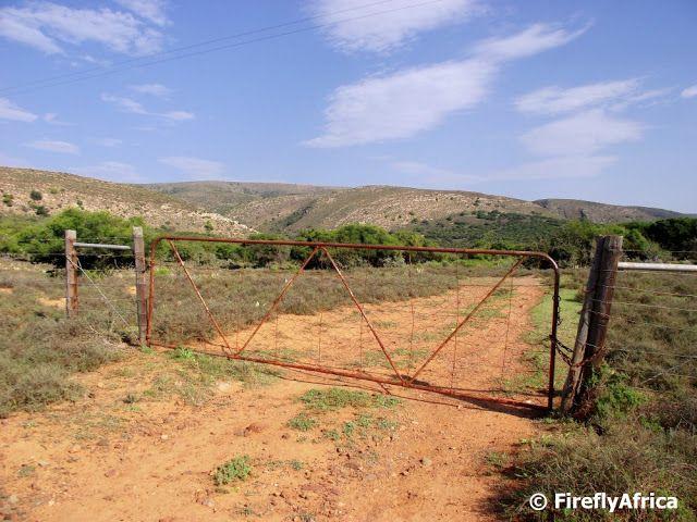 The Firefly Photo Files: Icons of the Karoo - Farm gate, karoo bossies, 'Acacia karoo' (renamed?) - the smells thereof, fresh clean air