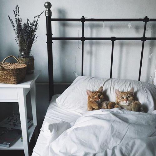 Mais non, nous n'avons pas du tout l'intention de nous lever. Nous vous rappelons que les chats dorment les 2/3 de leur vie ! Le message est clair !