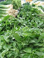 En botánica, una hierba o yerba es una planta que no presenta órganos decididamente leñosos. Los tallos de las hierbas son verdes y mueren g...