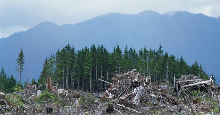 Como prevenir a poluição do solo. A poluição do solo se refere à degradação causada por atividades humanas, como a exploração de minerais, a eliminação inadequada de resíduos e a má utilização da terra. O desmatamento, a urbanização e a industrialização são os fatores responsáveis por este tipo de poluição que, além de destruir habitats, poluem o meio ambiente, afetando a animais ...
