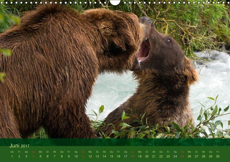 Der Bärenkalender 2017 CH-Version Grizzlybären - ein Fotoshooting der besonderen Art. Grizzlybären in ihrer natürlichen Umgebung. Beeindruckende Fotos dieser Spezie aufgenommen in der Wildnis Alaskas. Kalender mit Fest- und Feiertagen für die Schweiz..