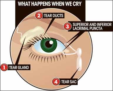 Are your eyes dry from wearing contact lenses? A Vancouver optometrist explains why and offers tips for fixing dry eyes!