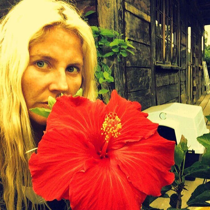 Hibiscus gigante