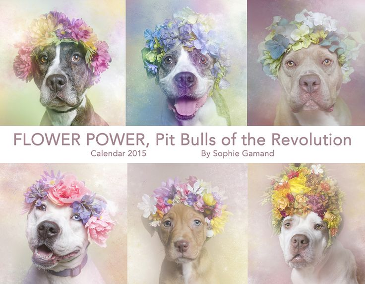 Sophie Gamand's #PitBullFlowerPower Calendar. Cute pitties in flowers? What more could you want?!?
