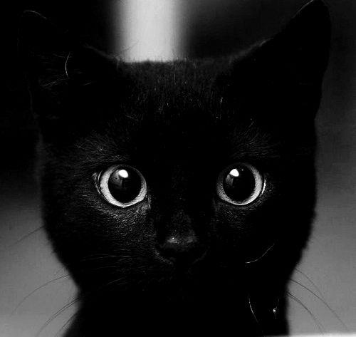 Hello.: Kitty Cats, Animals, Black Kitty, Big Eyes, Black Cats, Black Kitties, Black Kittens, Baby Cats, Blackcat