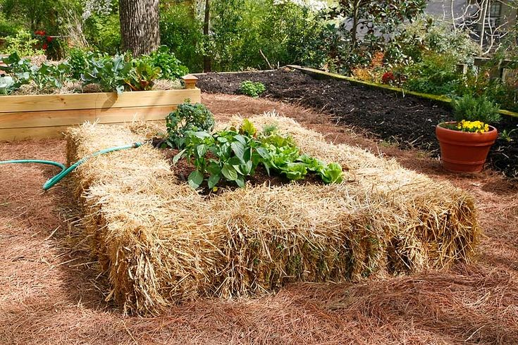 17 Best Images About Straw Bale Gardening On Pinterest
