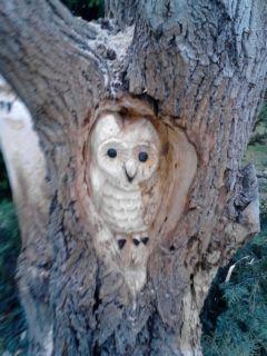 W drewnie wierzba