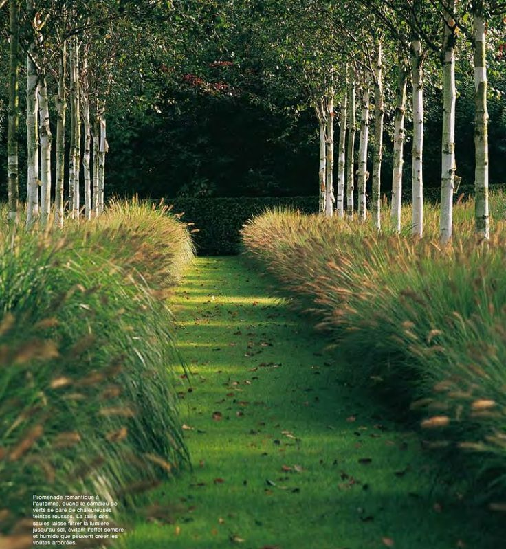 Piet blanckaert landscape architect just go with the for Ornamental grass design