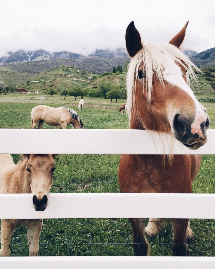 Pretty horses <3 mare and foal peeking from behind fence.