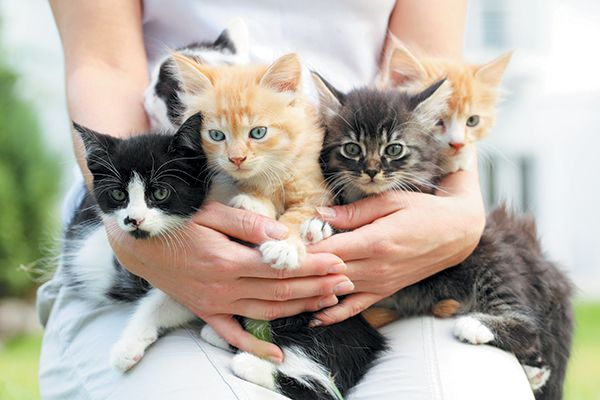 When Do Kittens Eyes Change Color Cat Breeds Cat Facts Cats And Kittens