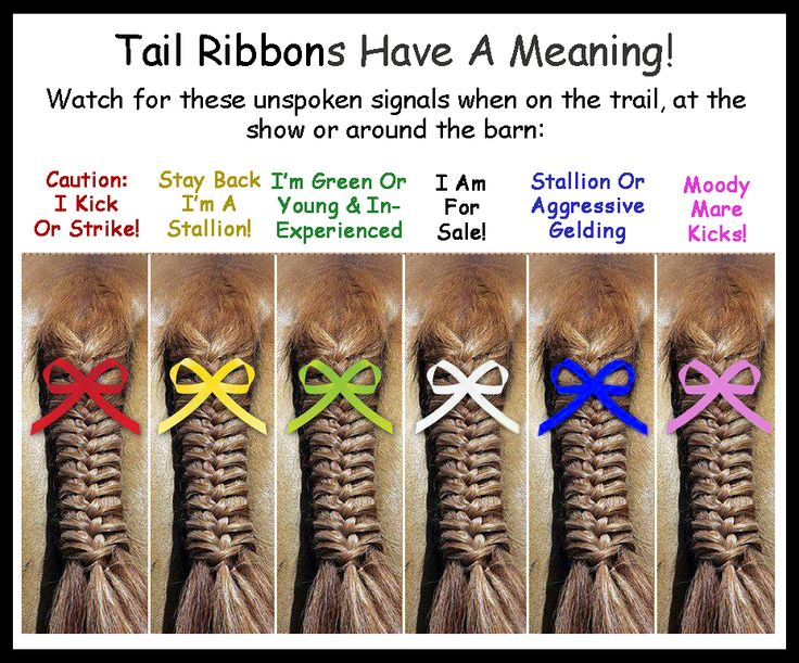 Did you know? Back in the day, equestrians often didn't have time to greet and speak with all the other riders before a foxhunt... so they put ribbons in their horses' tails to communicate what otherwise couldn't be communicated while racing over the fields.