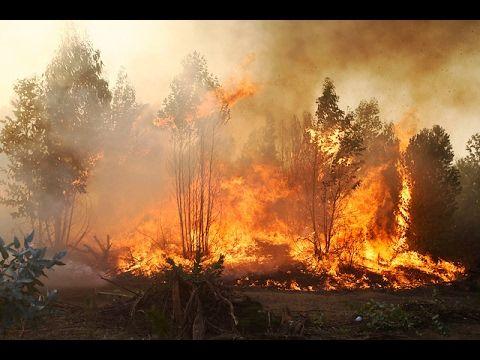 Cartel del Fuego: El escándalo tras las empresas que combaten incendios ...
