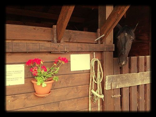 Horse and red flowers. Horse riding in the Oasi Zegna, #Piemonte. www.oasizegna.com