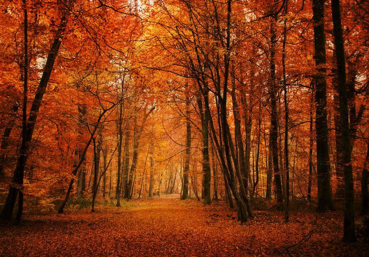 Forêt de Fontainebleau, en Seine et Marne