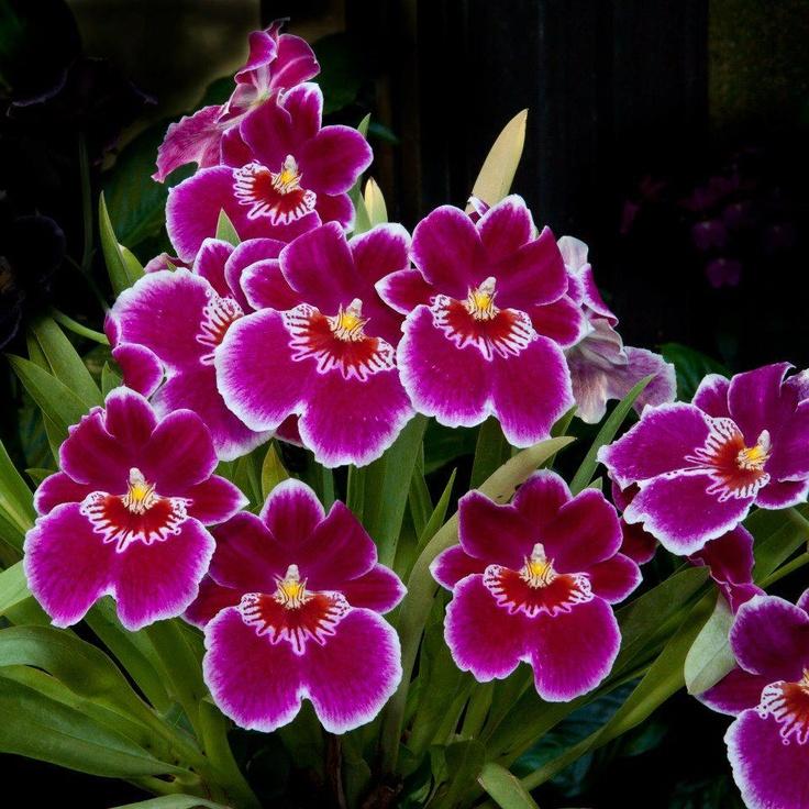 Variedad de flores si usted busca para cualquier tipo de - Tipos de flores silvestres ...